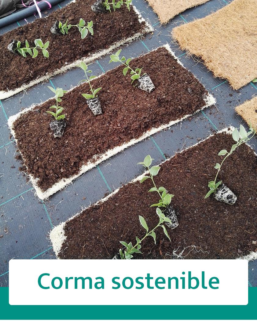 https://www.corma.es/modules/wimimagesblock/uploads/images/602394e6d43d0.jpg